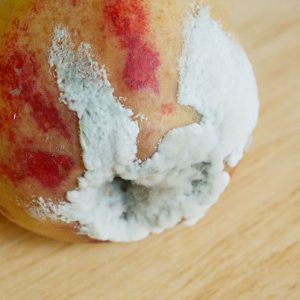 Mould on peach fruit free download image photo