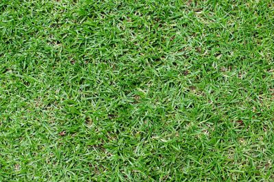 green grass free image download public domain