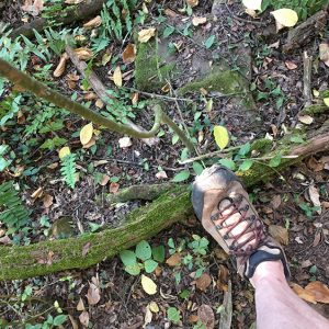 Hiking boots in a forest floor free image